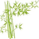 Bamboe, vector Royalty-vrije Stock Fotografie