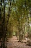 0017-bamboe Weg - Trang-Klap Tay Ninh Royalty-vrije Stock Afbeelding