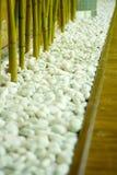 Bamboe in witte kiezelstenen Stock Afbeelding