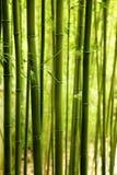 Bamboeachtergrond stock afbeelding