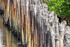 Bamboebarrière voor Mangrove Forest Protection Royalty-vrije Stock Afbeelding