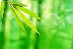 Bamboeblad en abstracte groene boomachtergrond bokeh Royalty-vrije Stock Afbeeldingen