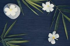 Bamboeblad en frangipanibloem op donkere achtergrond Cinematic gestemde foto Stock Foto