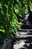 Bamboebladeren op de achtergrond van een weg Stock Foto