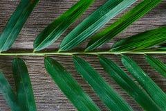 Bamboebladeren op grunge houten textuur als achtergrond met schaduw Stock Afbeeldingen