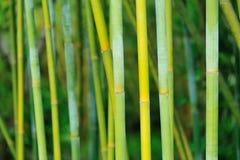 Bamboebomen die omhoog eruit zien stock afbeeldingen