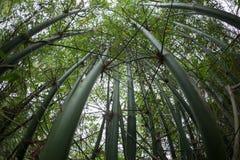 Bamboebomen die omhoog met vissenogen kijken royalty-vrije stock afbeelding