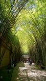 Bamboeboom royalty-vrije stock foto's