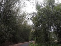 Bamboeboom en smalle weg Ontzagwekkend beeld stock afbeelding