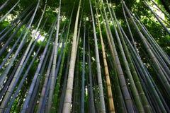 Bamboebos in Arashiyama Royalty-vrije Stock Afbeeldingen