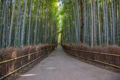 Bamboebos, Arashiyama, Kyoto, Japan stock foto