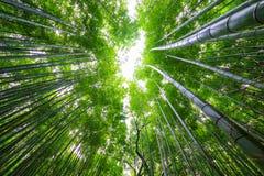 Bamboebos, Arashiyama, Kyoto, Japan royalty-vrije stock fotografie