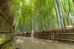 Bamboebos in Arashiyama, Kyoto Japan Royalty-vrije Stock Foto's