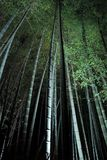 Bamboebos bij nacht Stock Afbeeldingen
