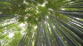 Bamboebos in Japan - een prachtige plaats voor recreatie stock videobeelden