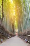 Bamboebos met het lopen manier die tot actueel bos leiden Stock Foto