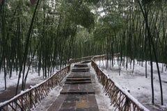 Bamboebos met sneeuw en een weg stock afbeeldingen