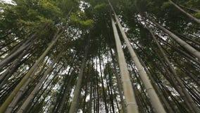 Bamboebos in stadspark, bodemmening, aardrecreatie, tropische vegetatie stock footage