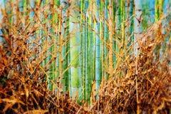 Bamboebosje in Arashiyama, Kyoto, Japan stock illustratie