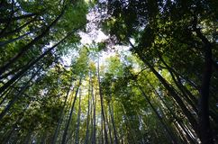 Bamboebosje, bamboebos in Arashiyama, Kyoto Royalty-vrije Stock Fotografie