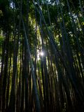 Bamboebosje, Japan stock afbeelding