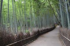 Bamboebosje in Kyoto, Japan Royalty-vrije Stock Foto's