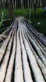 Bamboebrug royalty-vrije stock foto's