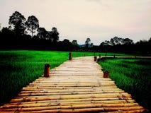 Bamboebrug met padievelden en sunsets Stock Afbeelding