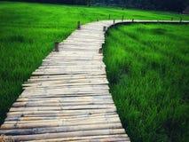 Bamboebrug met rijstaard Stock Foto