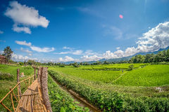 Bamboebrug op groen padieveld met aard en blauwe hemelachtergrond Royalty-vrije Stock Fotografie