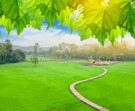 Bamboebrug op padieveld met plattelandshuisje Stock Afbeelding