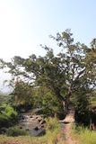 Bamboebrug over de rivier in het midden van de aanplanting royalty-vrije stock foto