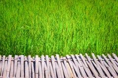 Bamboegang en groot padieveld, aardachtergrond royalty-vrije stock foto