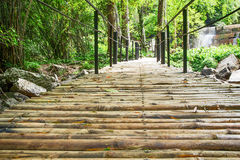 Bamboegang in het bos Royalty-vrije Stock Fotografie