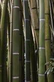 Bamboegordijn in het Zuiden van Frankrijk Stock Afbeeldingen