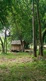 Bamboehuis in het bos Royalty-vrije Stock Afbeeldingen