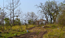 Bamboehut in een Bos Royalty-vrije Stock Foto