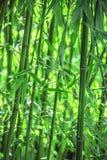 Bamboeinstallaties Stock Foto's