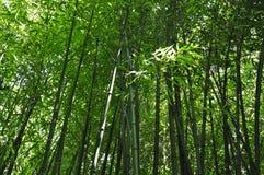 Bamboeinstallaties Royalty-vrije Stock Afbeeldingen