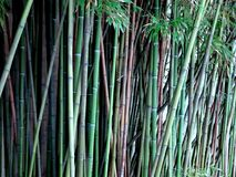 Bamboeinstallaties in aard Stock Afbeeldingen