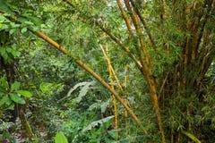 Bamboeinstallaties in het midden van de groene wildernis Stock Foto's