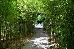 Bamboeinstallaties rond weg Royalty-vrije Stock Foto