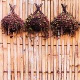 Bamboeinstallaties voor het hangen Stock Afbeelding