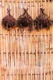 Bamboeinstallaties voor het hangen Stock Foto's