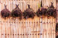 Bamboeinstallaties voor het hangen Royalty-vrije Stock Foto's