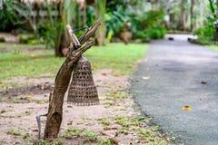 Bamboelamp Stock Afbeeldingen