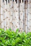 Bamboeomheining Stock Afbeelding