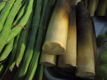 Bamboespruit Stock Foto