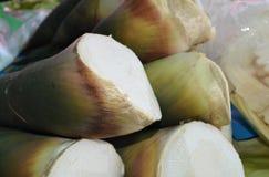 Bamboespruit Stock Foto's
