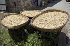 Bamboespruiten die in Hongcun drogen stock afbeeldingen